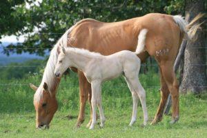 Pferd Mutter mit Fohlen